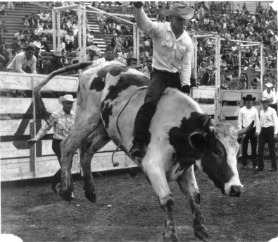 "Cecil ""Whitey"" Butts, Alma, Kansas, competes here in the bull riding event at an unidentified 1959 rodeo. Butts traveled the rodeo circuit in the 1950s and 1960s competing in bronc riding, bull riding and other rodeo events. Photo courtesy Whitey Butts."