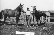 """Fred Palenske stands with the """"old mill team"""" at his father's mill located at Alma, Kansas, circa 1907."""