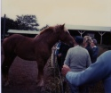 A tour group from the Wabaunsee County Historical Society visits the Johnstone's Centennial Farm's ranch in this view, circa 1980.