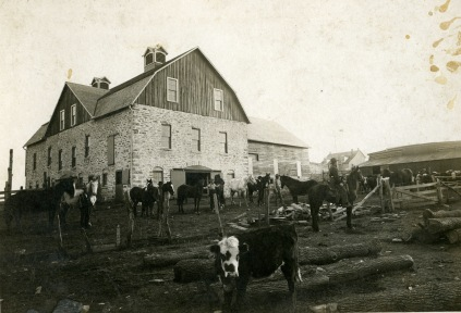 This view of the Schepp barn, circa 1905, shows the massive barn when it was almost new.